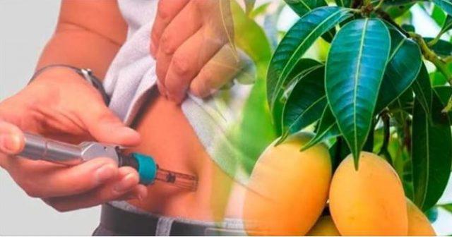 Si eres diabético hierve 15 hojas tiernas de esta mata y resuelve tu diabetes sin insulina o pastillas