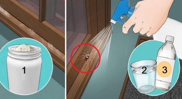 Esta es la combinación mas fuerte que existe, rocialo en tu casa y nunca mas veras arañas ni cucarachas es tu hogar! #Comparte, es buenísimo.