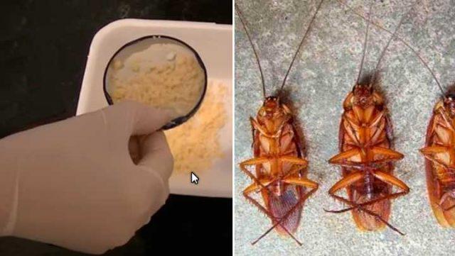 Pon esto en la esquina de tu hogar y mira como aparecen y mueren todas las cucarachas en menos de 5 minutos; Todos #comparten este articulo como locos