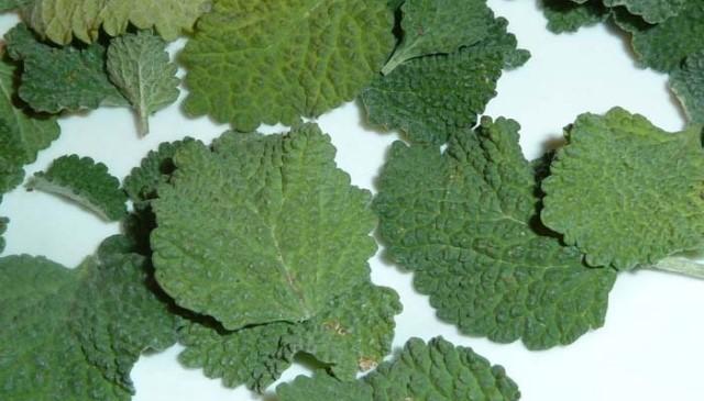Esta planta cura de forma casi inmediata el higado, vesicula y desinflama magicamente los intestinos