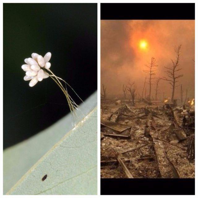 """aparece la """"flor del fin del mundo"""". la biblia tenía razón. se cumple una profecía más…"""
